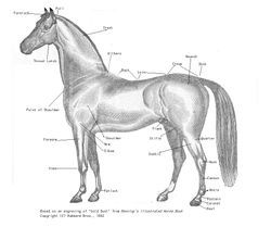 250pxhorse_parts