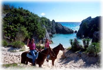Bermudahorses